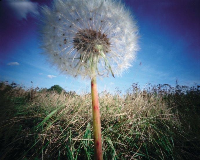 Habitat – Spring/Summer 2003: Supernature collection, 2002 (Retail), image 1