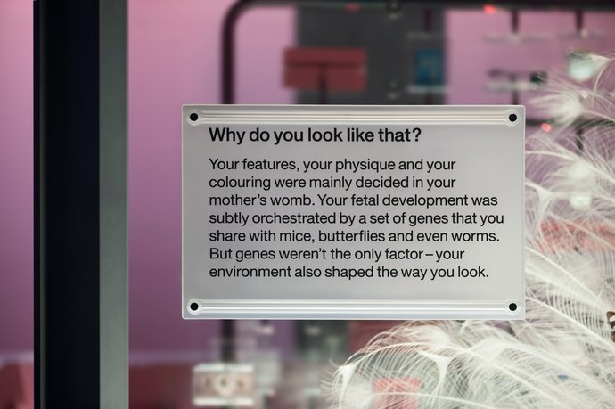 Science Museum – Who am I? (2010) (Exhibition), image 5